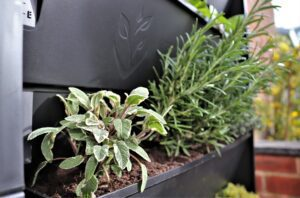 Parsley, sage, rosemary and thyme growing in a PlantBox living wall.