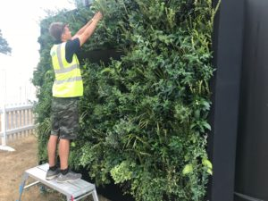 Installing a green wall for a client
