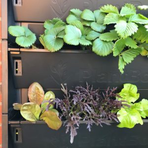 Close up of PlantBox trough showing water indicator