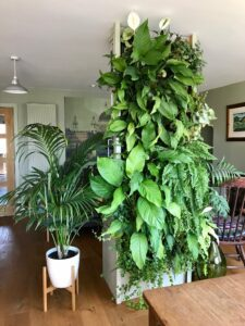 Indoor plants create a lush urban jungle